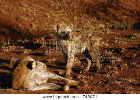 Hyena Mother & Cub