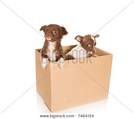 Realocação de cão