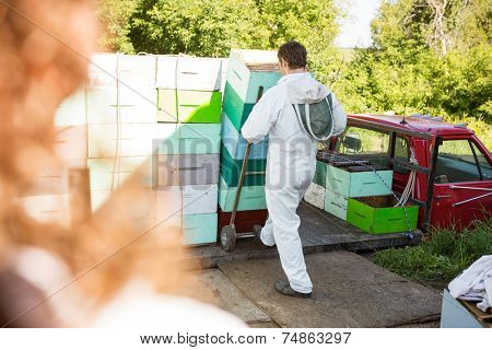Rear view of male beekeeper loading stacked honeycomb crates in truck