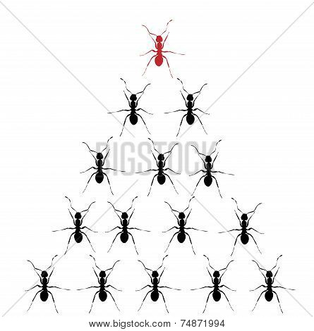 Conceptual-stacked Black Ants With One Red Ant On Top