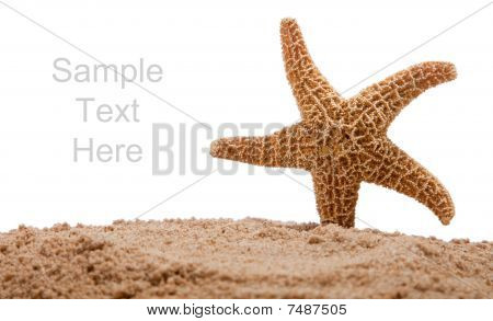 A Starfish In Sand On White With Copy Space