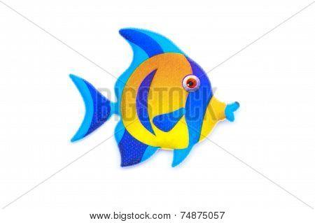 Gold Stripe Maroon Clownfish - Premnas Biaculeatus - Stock Image