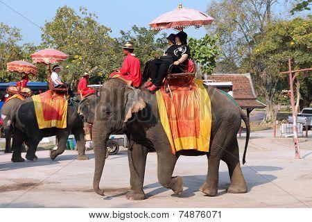 Thailand Elephant Ride