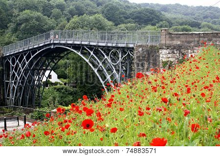 Ironbridge Poppies