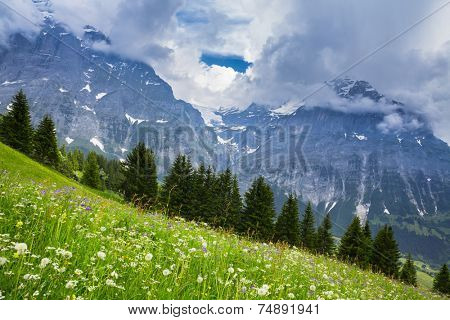 Green Meadow in Swiss alp, Switzerland Interlaken - Lauterbrunnen
