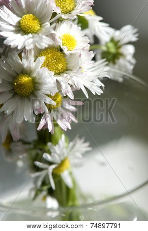 Beautiful daisies on the water