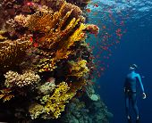 pic of bottomless  - Underwater shot of the lady free diver ascending along the vivid coral reefs - JPG