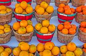 foto of florida-orange  - Red and brown baskets overflowing with Honeybell Oranges from Florida nicely displayed - JPG