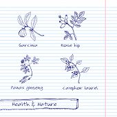 picture of ginseng  - Handdrawn Illustration  - JPG