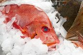 stock photo of red snapper  - Red snapper on market display - JPG