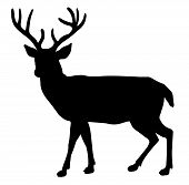 foto of bucks  - A Vector of a Huge Buck Silhouette - JPG