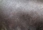 foto of tapir  - close up shot of tapir skin texture - JPG