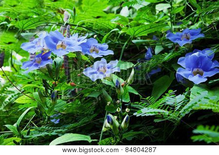 beautiful blue flowers with ivy