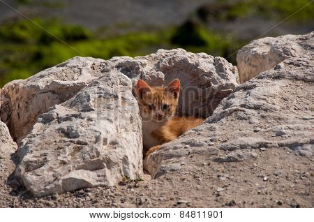 Cute Kitty Hiding, Al Khobar, Saudi Arabia