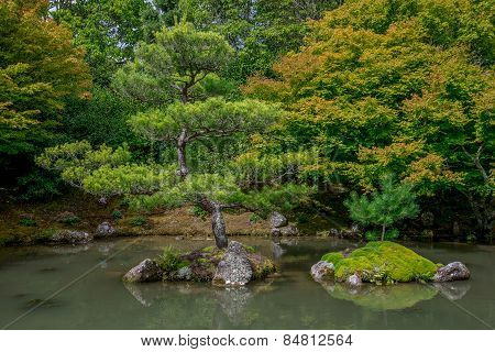Bonsai look trees in Japanese garden, Hamilton Botanical gardens