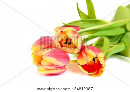 Beautiful Pink  With Yellow Tulips