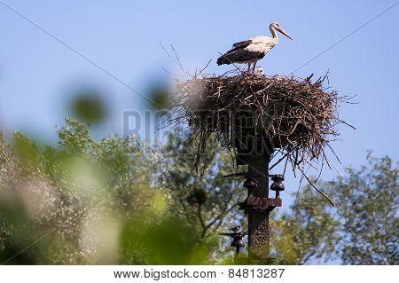 stork,bird