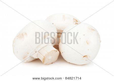 Champignon mushrooms. Isolated on white background