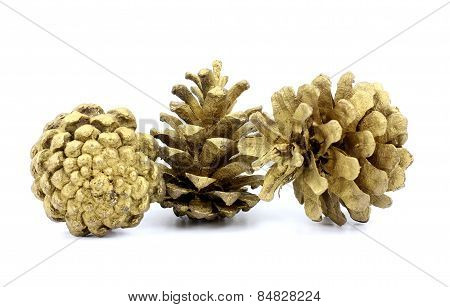 Three Pinecone Gold
