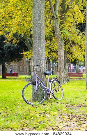 Bicycle Near The Tree
