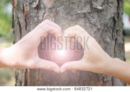 Close-up of human hands making heart in front of tree