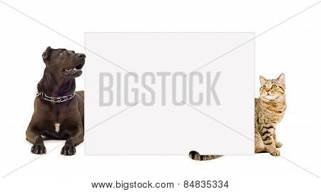 Dog and cat  behind a banner