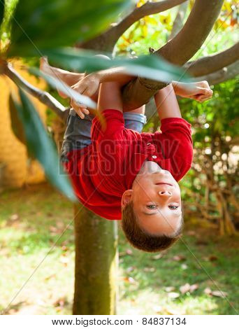Boy hanging from a tree branch in a summer garden
