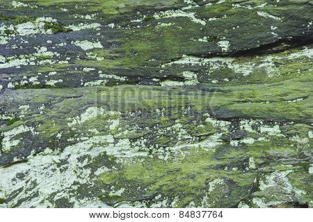 Moss on rock background