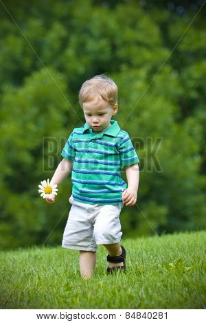 Young handsome boy walking in field with a daisy in his hand