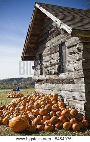 A pile of pumpkins next to an old wooden shed
