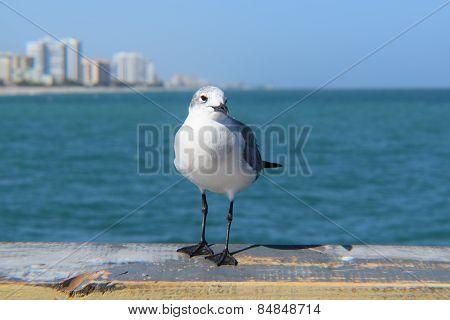 Seagull and the Atlantic Ocean