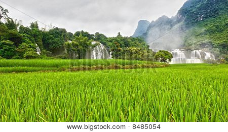 Rice Field And Waterfall