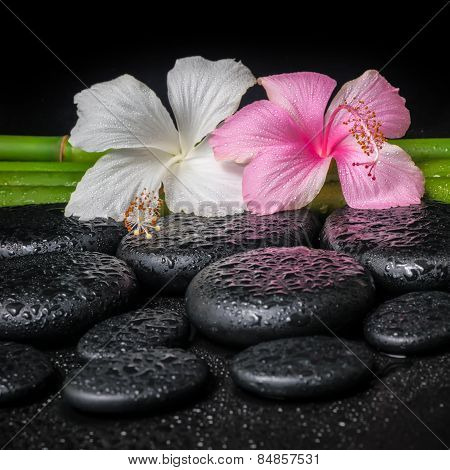 Spa Concept Of White, Pink Hibiscus Flower And Natural Bamboo On Zen Basalt Stones With Drops, Close