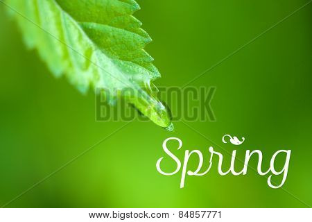 Water drops on fresh green leaves, on greenbackground. Hello Spring concept