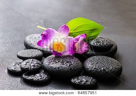 Spa Concept Of Purple Orchid Dendrobium And Green Leaf Calla Lily With Dew On Black Zen Stones, Clos
