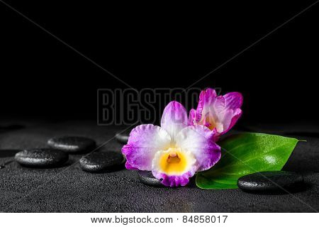 Spa Still Life Of Purple Orchid Dendrobium And Green Leaf Calla Lily With Dew On Black Zen Stones, C