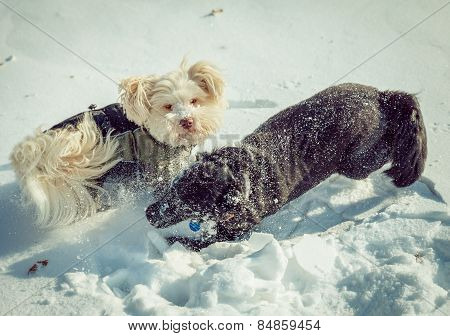 Dogs Playing In The Snow In Winter