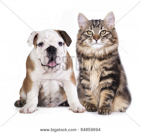 puppy and kitten , cat and dog