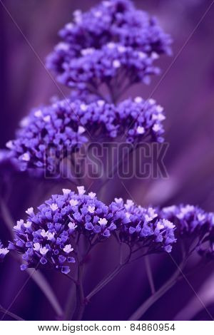 A few purple flowers