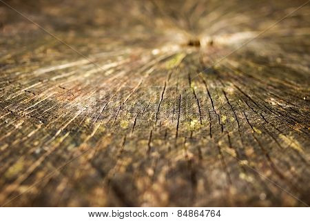 Close Up Of Stump In A Wood