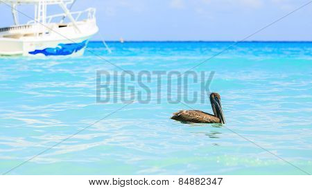 Pelican And Turquoise Caribbean Sea
