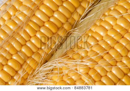 Grains Of Ripe Corn Closeup