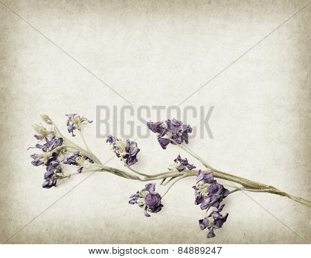 dry lavender on paper background