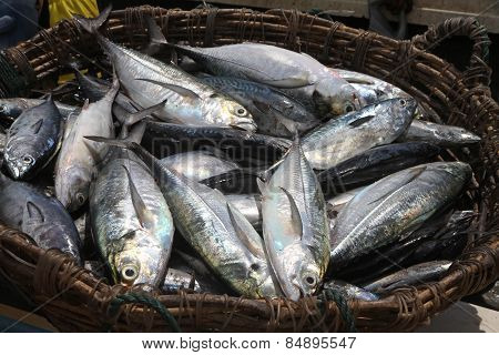 Fishes On The Basket