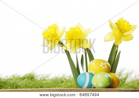 Yellow narcissus Flowers and easter eggs on spring grass background