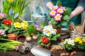 image of plant pot  - Gardener planting flowers in pot with dirt or soil at back yard - JPG