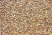 foto of legume  - Brownish variety of Cowpeas background - JPG