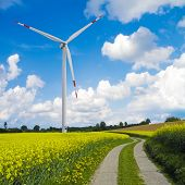 picture of wind wheel  - agrarian landscape with blooming canola field and wind turbine - JPG