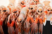 image of crawfish  - Fresh crawfish on ice in a market - JPG