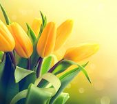 picture of yellow buds  - Spring Flowers bunch - JPG